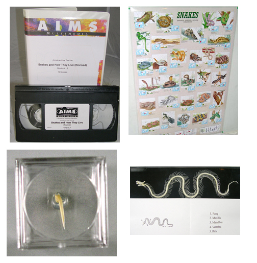 Snake Education Kit